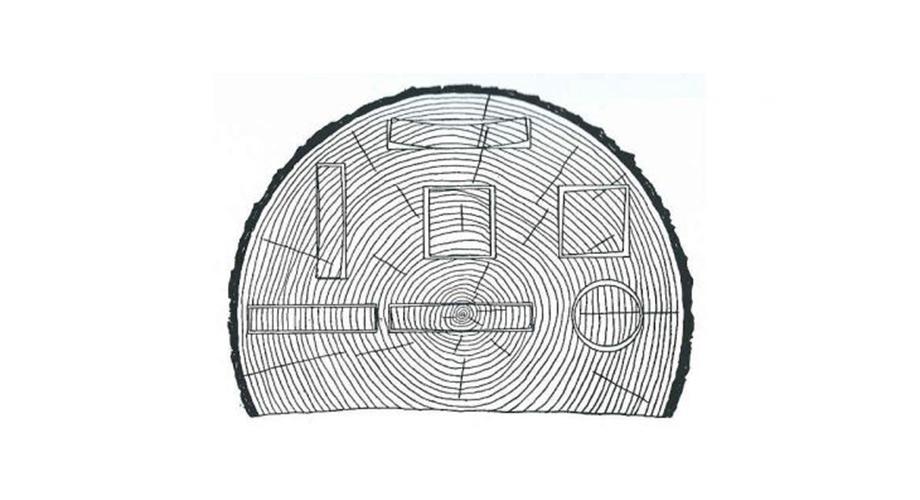 holzquerschnitt-Holz